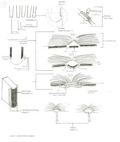 """butlerbookbinding: """" notasdeartebookstudies: """" BOOK ANATOMY / ANATOMÍA DEL LIBRO My friend India Johnson created this amazing bilingual material for bookbinders and all kind of book lovers! She..."""