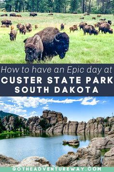 South Dakota Vacation, South Dakota Travel, Rapid City South Dakota, Vacation Trips, Vacation Spots, Vacations, Custer State Park, Road Trip Usa, Travel Usa