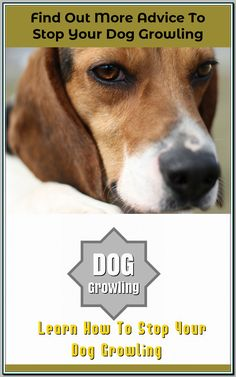 Ways Of Stopping Your Dog From Growling - Dog Training Tips and Tricks Dog Growling, Pet Dogs, Pets, Positive Reinforcement, Dog Training Tips, Large Dogs, Dog Owners, Dog Bed, Your Pet