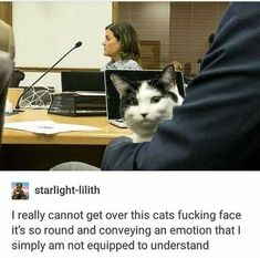 ImgLuLz Serve you Funny Pictures, Memes, GIF, Autocorrect Fails and more to make you LoL. Cute Funny Animals, Funny Cute, Cute Cats, Pretty Cats, Adorable Kittens, Cat Memes, Funny Memes, Funniest Memes, 9gag Funny