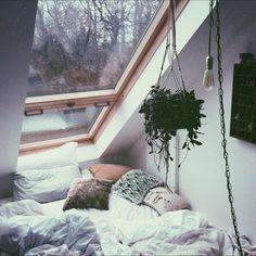 wide window & plant via tumblr