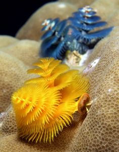 fibonacci spiral images in nature | Spirals & Fibonacci Swirls in Nature and Design / Christmas tree worms