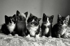 (via Kitty cat row.)
