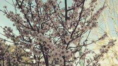 Tomé esta foto en Casilda 😍 me enamoré de estas flores