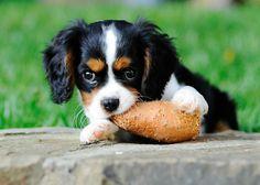 Chew treat for a dog - Sweet Potato!!