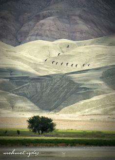 ♂ Amazing nature Cayirhan - Turkey