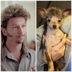 Joe Dirt Dog is Hilarious