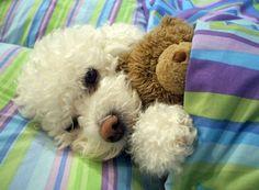 Puppies cuddling stuffed animals. Happy Wednesday - Album on Imgur