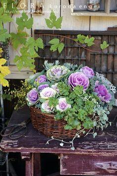 ミニハボタンのバスケット寄せ植え |フローラのガーデニング・園芸作業日記|Ameba (アメーバ)