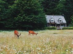 Country cottage, wild flowers, and deer. The peace, serenity, and beauty of living in the country.