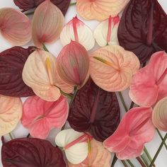 veriety of pink, burgundy and peach anthuriumm flower, blooms by brrch_floral In Natura, Bouquet, Plants Are Friends, Color Stories, My Flower, House Plants, Planting Flowers, Floral Arrangements, Beautiful Flowers