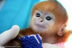 WEIRD CUTE | Cute Monkey Face Here : This picture was posted 6/4/2010, it has ...