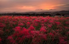 Red sunset flower Photo by Takuya Higuchi — National Geographic Your Shot