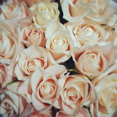 My absolute favorite roses.