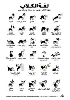 illustrationsposters movieposters infographics language version german doggie poster wants tell your what you dog to Doggie Language GERMAN VERSION Poster dog language what your dog wants to tell you You can find Infographics and more on our website Dog Body Language, Cat Body, E Book, Funny Illustration, Body Hacks, Cute Kittens, Training Your Dog, Akita, Pet Health