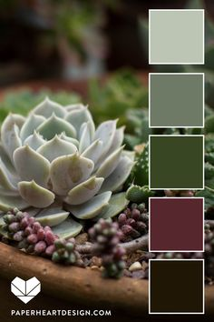 Color Palette: Sweet Succulents — Paper Heart Design You are in the right place about wedding color palette neutral Here we offer you the most beautiful pictures about the wedding color palette elegan Purple Color Schemes, Color Schemes Colour Palettes, Earthy Color Palette, Paint Color Schemes, House Color Schemes, Colour Pallete, House Colors, Decorating Color Schemes, Paint Colors