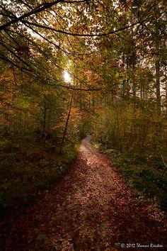 Forest path,  Habernau, Upper Austria. (by land[e]scape)