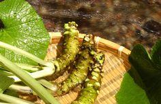 上津江わさび  Kamitsue wasabi