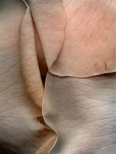 The texture of rose petals. Once again, a similar texture to the lines on one's hand. Textures Patterns, Color Patterns, The Blushed Nudes, Rose Petals, Pink Petals, Color Inspiration, At Least, Delicate, Prints