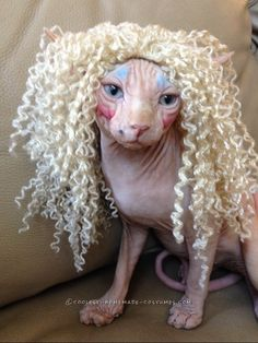 Twisted Sister Cat Costume... Coolest Halloween Costume Contest