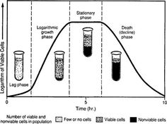 Microbial Reproduction and Growth