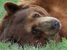 A bear 'come hither' look?  :)