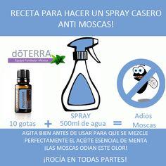 Aleja las moscas de tu hogar con #aceite_esencial de #menta #doTERRA Descarga todo sobre aceites esenciales doTERRA en www.aceitesesencialesmexico.com.mx