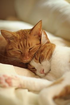 Ginger love