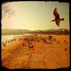 SummerSanta Monica, CA