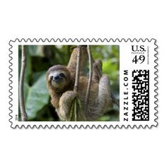 $$$ This is great for          A young brown-throated three-toed sloth postage           A young brown-throated three-toed sloth postage This site is will advise you where to buyReview          A young brown-throated three-toed sloth postage Online Secure Check out Quick and Easy...Cleck Hot Deals >>> http://www.zazzle.com/a_young_brown_throated_three_toed_sloth_postage-172653478915279200?rf=238627982471231924&zbar=1&tc=terrest