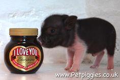 petpiggies uk   Love You   Cute animals