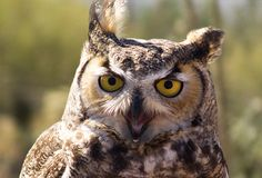 This Owl | The 25 Happiest Animals In The World