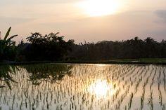 Pamiętam jak się pakowałam na wyjazd do Hanoi, jakby to było wczoraj. Dziś mija już 9 miesięcy od kiedy tu mieszkam. Czas leci niezwykle szybko. Na wyjazd do Wietnamu byłam dobrze przygotowana. Szereg szczepień, starannie …