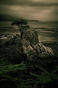 The Lone Cypress, Monterey, CA, USA  #photography #California #ocean #art