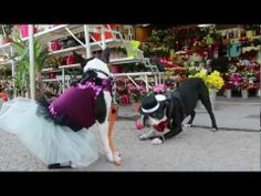 Watch this Video of the Valentine's Day Celebrated by Dogs. http://www.bterrier.com/happy-valentines-day-celebrated-by-dogs/