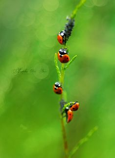 The little treasures of nature Before any question: this is NOT a photomanipulation, and I found them like that. Five For The Dinner. Wedding Coloring Pages, Garden Bugs, Lucky Ladies, Bird Tree, Bugs And Insects, Wild Ones, Find Picture, Shades Of Red, Beautiful Gardens