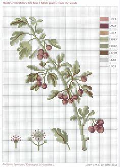 Gallery.ru / Фото #14 - Herbier - Mongia