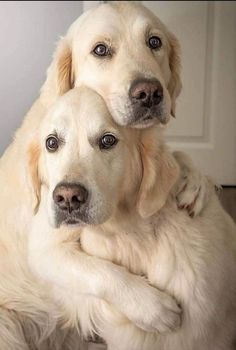 Beautiful Dogs, Animals Beautiful, Cute Animals, Beautiful Things, I Love Dogs, Puppy Love, Cute Dogs, Cute Animal Pictures, Best Friends Forever