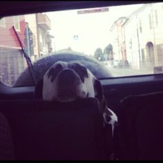 Laika durante il viaggio per la toilettatura :-)