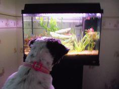 Tia loves watching fish