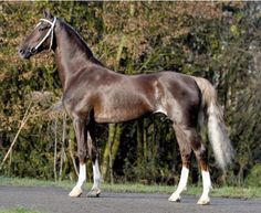 """""""Sabino Flaxen Liver Chestnut"""" Given that this horse's tail has a silvery hue to it, I really think this is either a silver dapple or a dark chestnut with sabino whiting out the tail."""