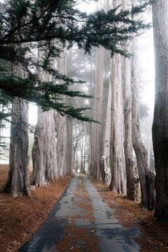 Walk on my path, those old trees protecting me.