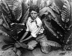 Child Labor in Tobacco Field, 1916. Lewis Wickes Hine