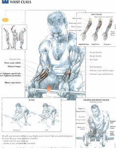 Wrist Curls #exercise #workout #routine #fitness