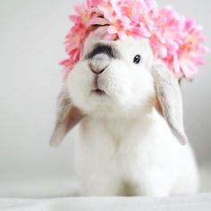 """553 Likes, 1 Comments - rabbit (@rabbit__.__tv) on Instagram: """"#TGIF  The beautiful flower crown is from  #jfr #jfrse Credit from: @exempelthebunny…"""""""
