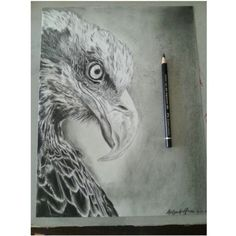 Eagle with charcoal, graphite and black coloured pencil