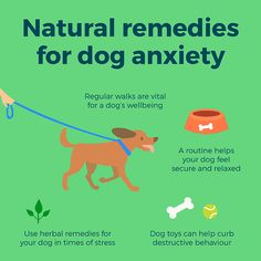 Natural Remedies for Dog Anxiety - Healthy Life | Just like humans, dog's can have anxiety about certain experiences too. Follow our natural and holistic remedies for dog anxiety to see if you can help soothe the mood of your canine.