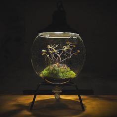 「ASITA_ROOM×Re:planter」 大阪天満橋 アシタノシカク内_ASITA_ROOMにて 京都在住の植栽家 Re:planter 村瀬貴昭の展示を行います。 今回、人気のSpace Colonyシリーズの展示をはじめ スペシャルコラボレーションとして デザイン/ アシタノシカク(吹きガラス 協力/SORTE GLASS) 植栽/ Re:planter による「ASITA_ROOM_Space Colony」を発表します。