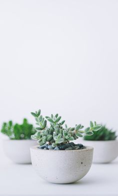 6 Easy Clever Tips: Natural Home Decor Feng Shui House Plants natural home decor wood interior design.Organic Home Decor Ideas Grey Walls natural home decor wood inspiration.Organic Home Decor Ideas Tree Stumps. Cacti And Succulents, Planting Succulents, Potted Plants, Cactus Plants, Garden Plants, Indoor Plants, Planting Flowers, Mini Plants, Garden Water