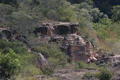 GeoPark Araripe: troncos de coníferas petrificados de 110 milhões de anos, aproximadamente, na Floresta Fóssil do Geotope Missão Velha